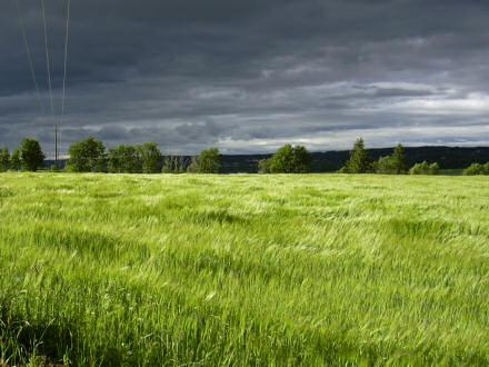 Desktop wallpaper image showing a green field, with dark, grey skies