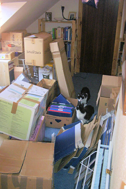 A room full of cardboard boxes.  Two black and white cats are exploring.