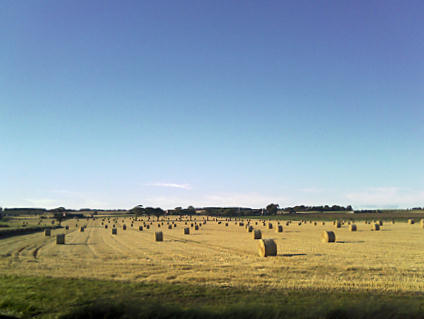 Field of hay bales against a blue sky