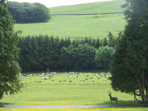 Sheep grazing in the field at Hoscote