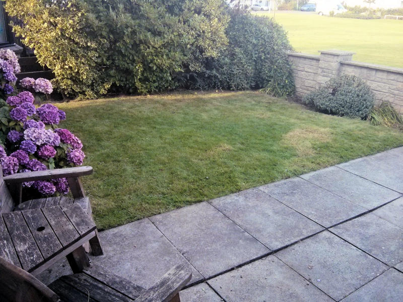Our back garden in a state of order